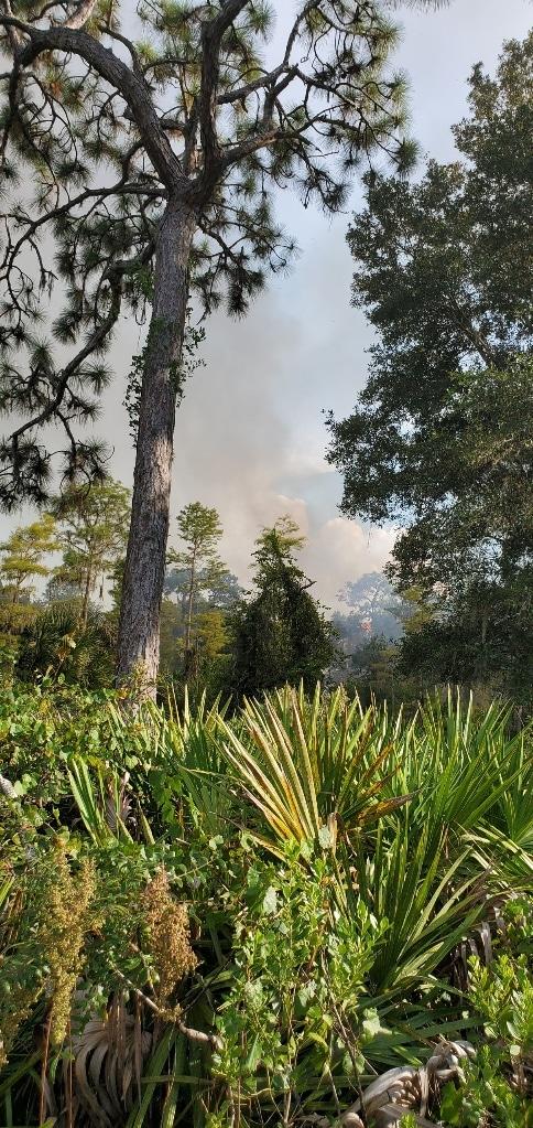 Brush fire burning in the Brooker Creek Preserve